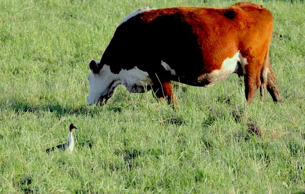 Audubon's Conservation Ranching Program