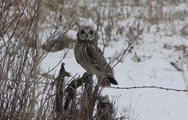 Seasonal Birding in Fargo-Moorhead