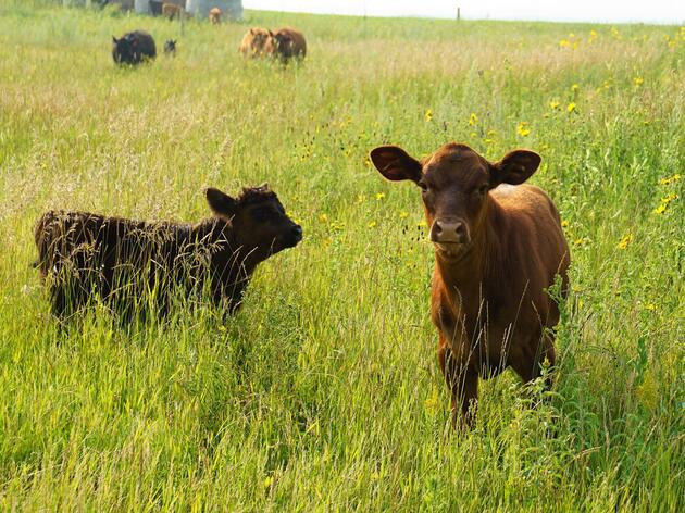 What in the World is Conservation Ranching?