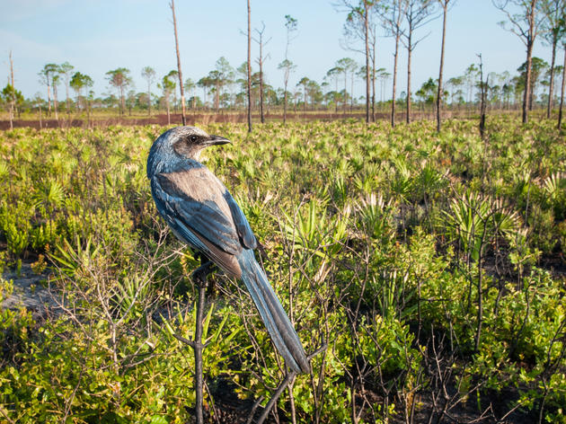 The Surprising Way Birds Are Trying To Dodge Climate Change