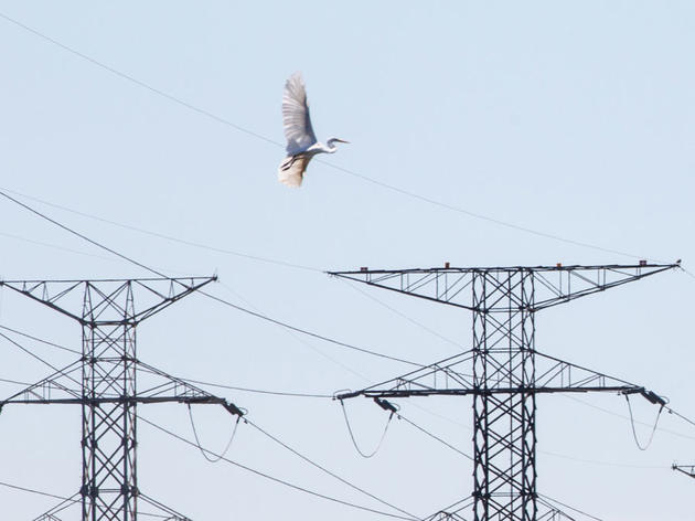 How Clean Energy and Birds Can Coexist